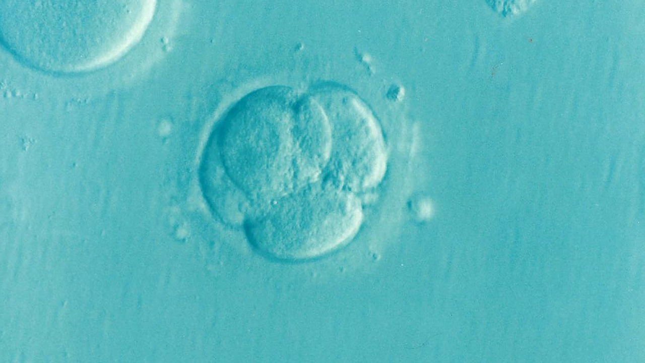 A close-up, zoomed in image of an embryo cell, which appears to be several circles intersecting.