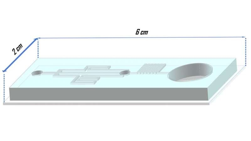 Schematic of the microfluidic platform for cryoprotectant loading. Graphic shows dimensions of 2cm X 6cm