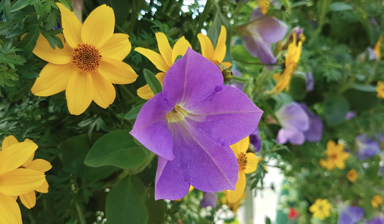 Pro Tips For Stunning Annuals All Summer Long Blog Floral Acres
