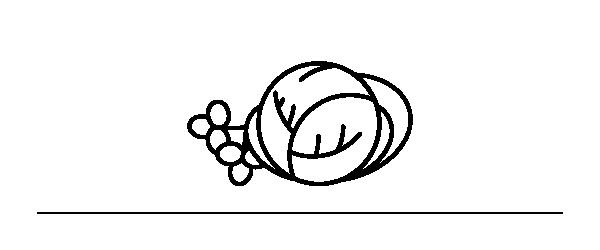Illustrazione cavolo