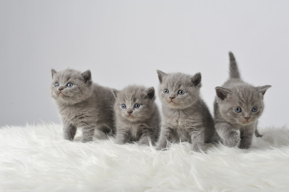 Tierfoto Katzen