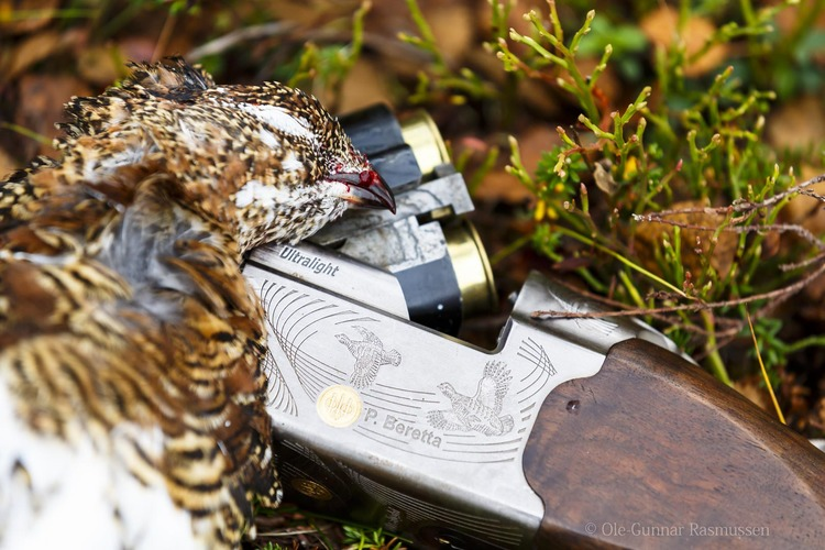 Grouse, Hare And Goose Hunting