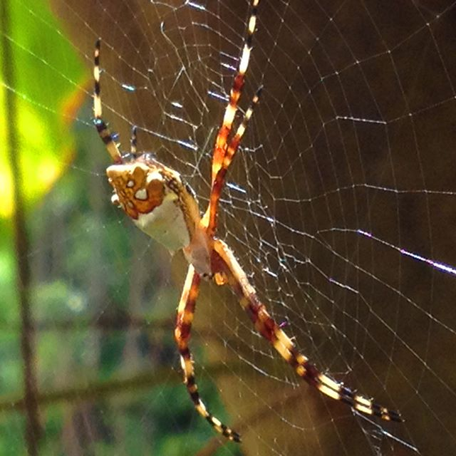 Eeeeekkkk… was walking a trail and came across this beauty. She was basking in the sun. She is beautiful…