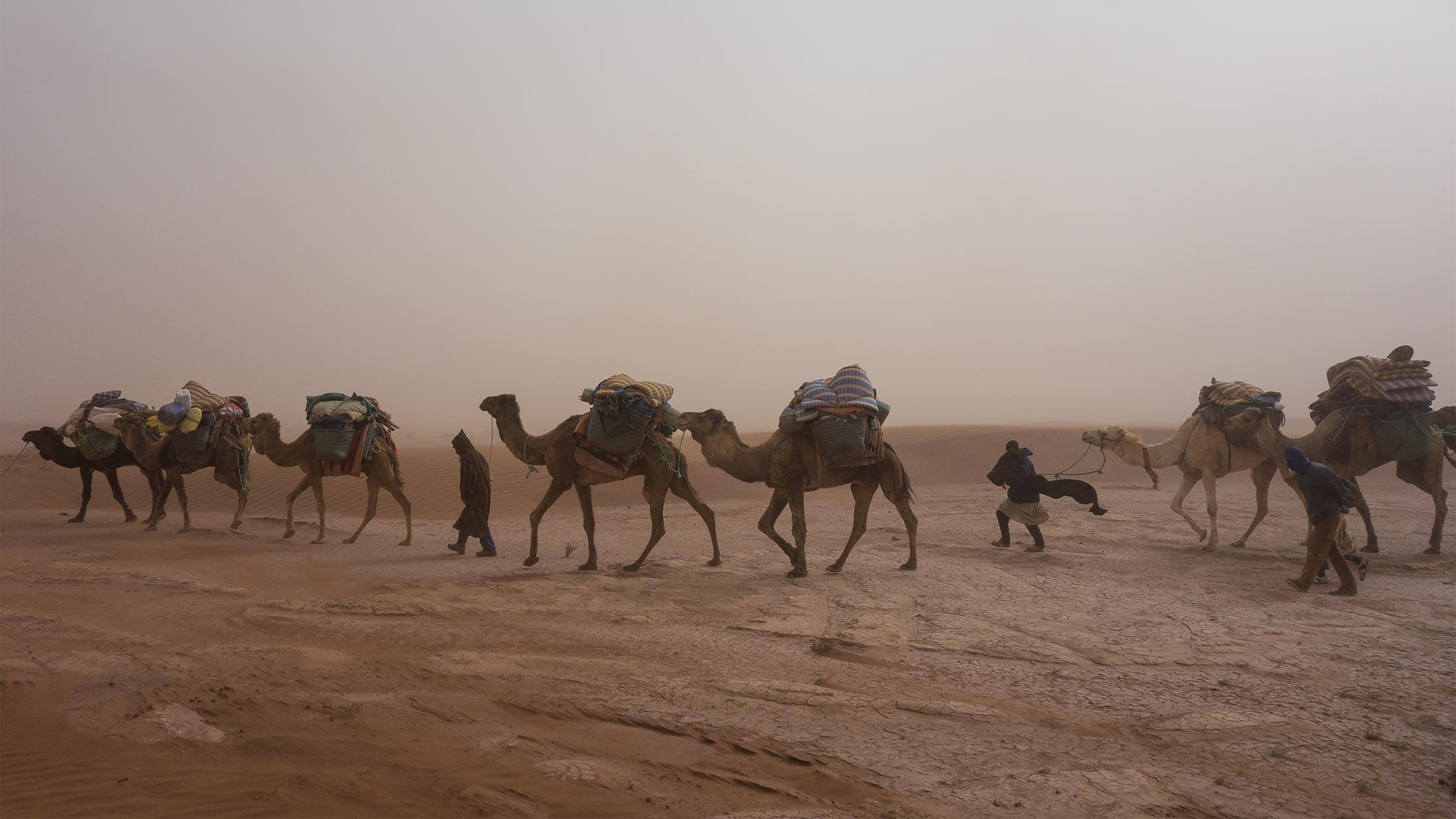 Harald Schaffer Thumbnail: Reportage Marokko, Kamele in einer Reihe