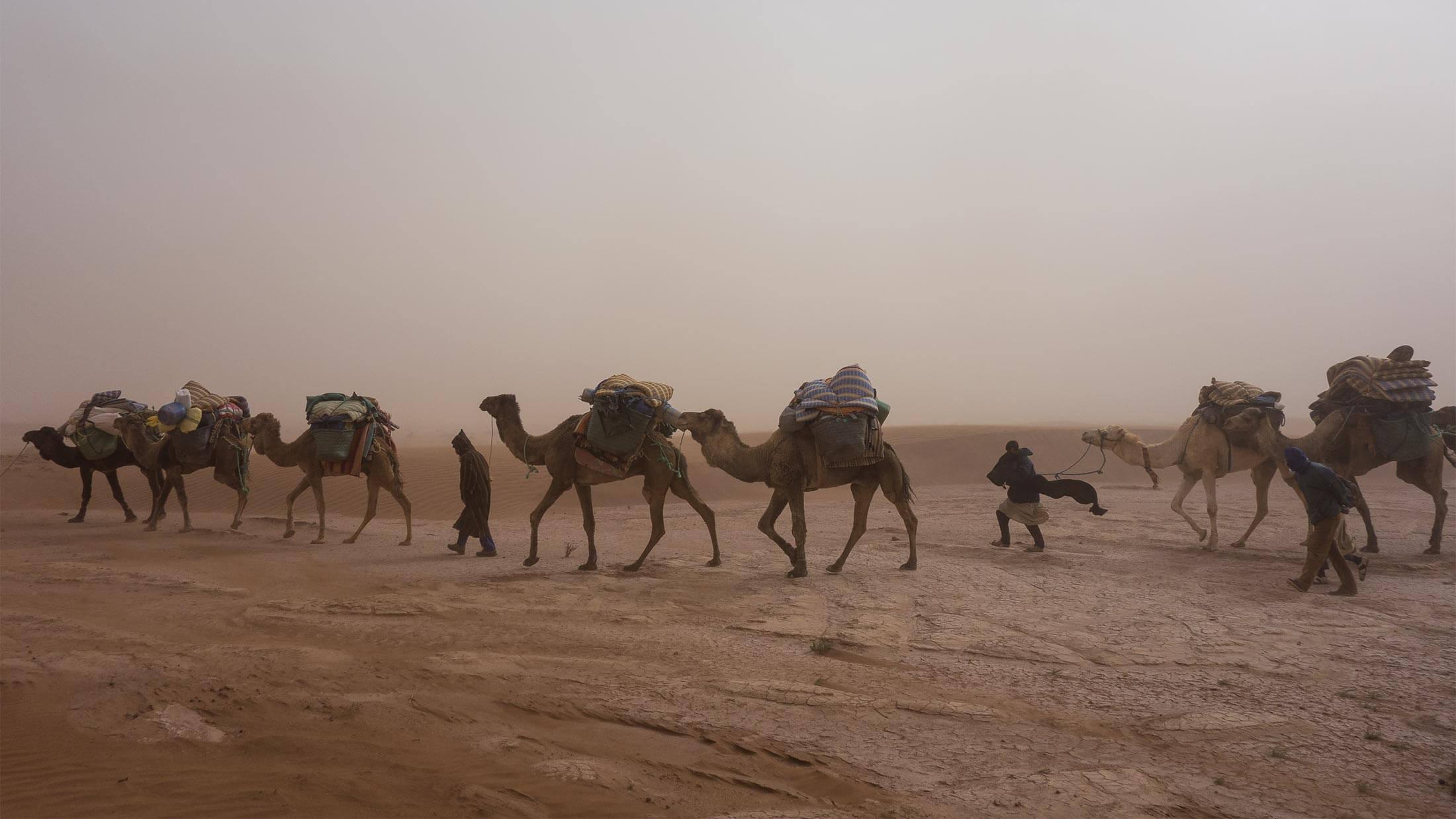 Wüste (Harald Schaffer) Titelbild