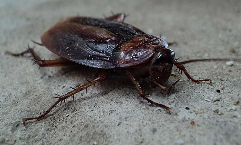 Brisbane pest control begins with an inspection