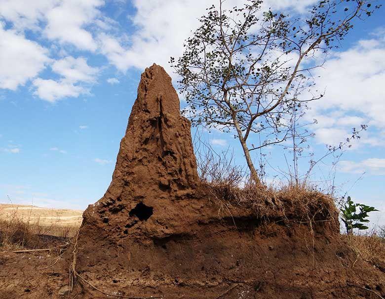 Brisbane termite services know where termites hide