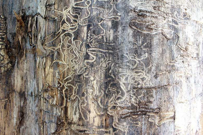 Professional termite treatment stops property damage