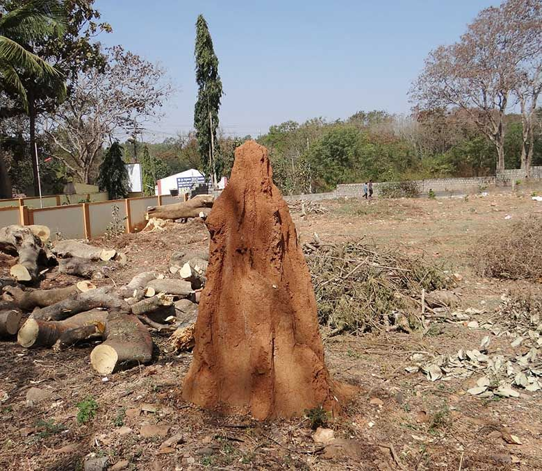 Termite treatment costs go towards protecting property value