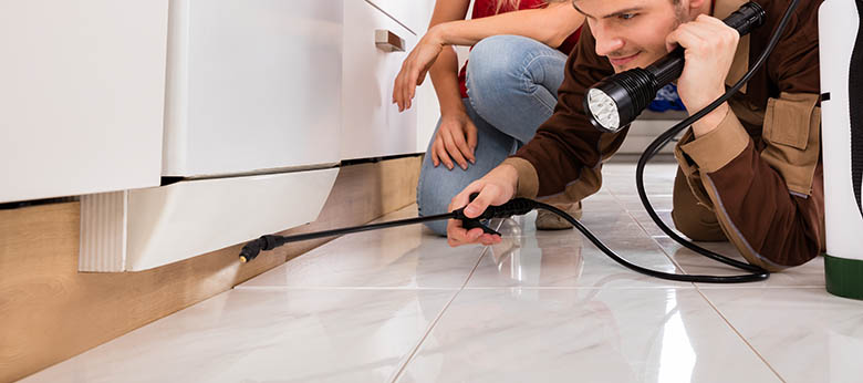 pest inspection at home