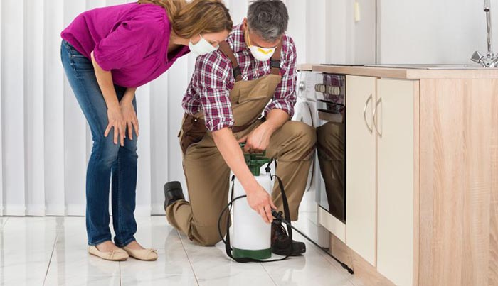 Save money down the road with regular pest inspections