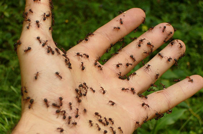 Pest inspections can find other Logan-area pests