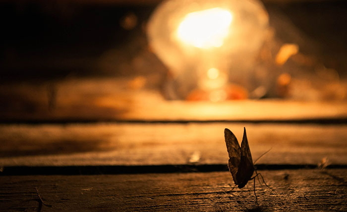 Like moths, flying termites are attracted by light