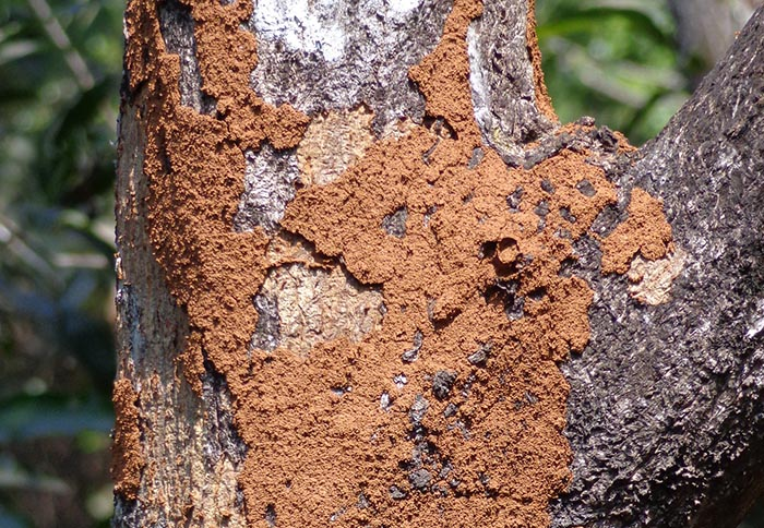 Flying termites' offspring eat wood, making flying termites dangerous