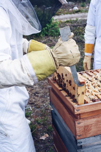 beehive work
