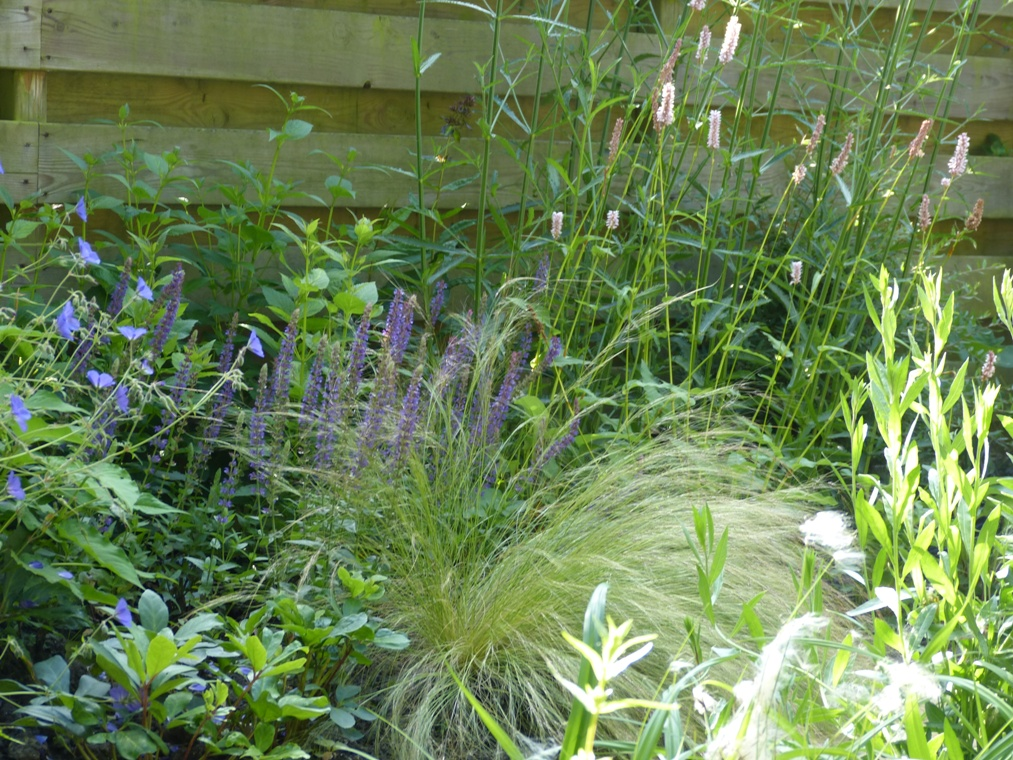 Vaste planten en siergrassen