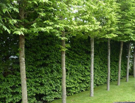 Lei bomen