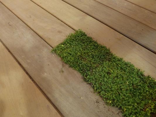 Planken met beplanting