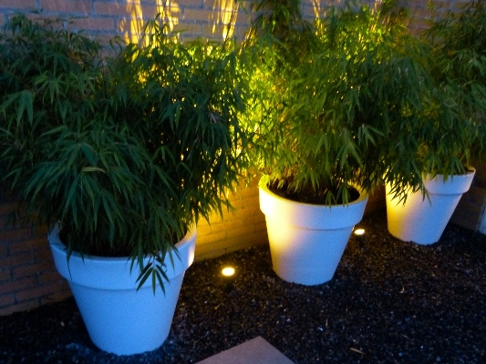 Plantenbakken met verlichting