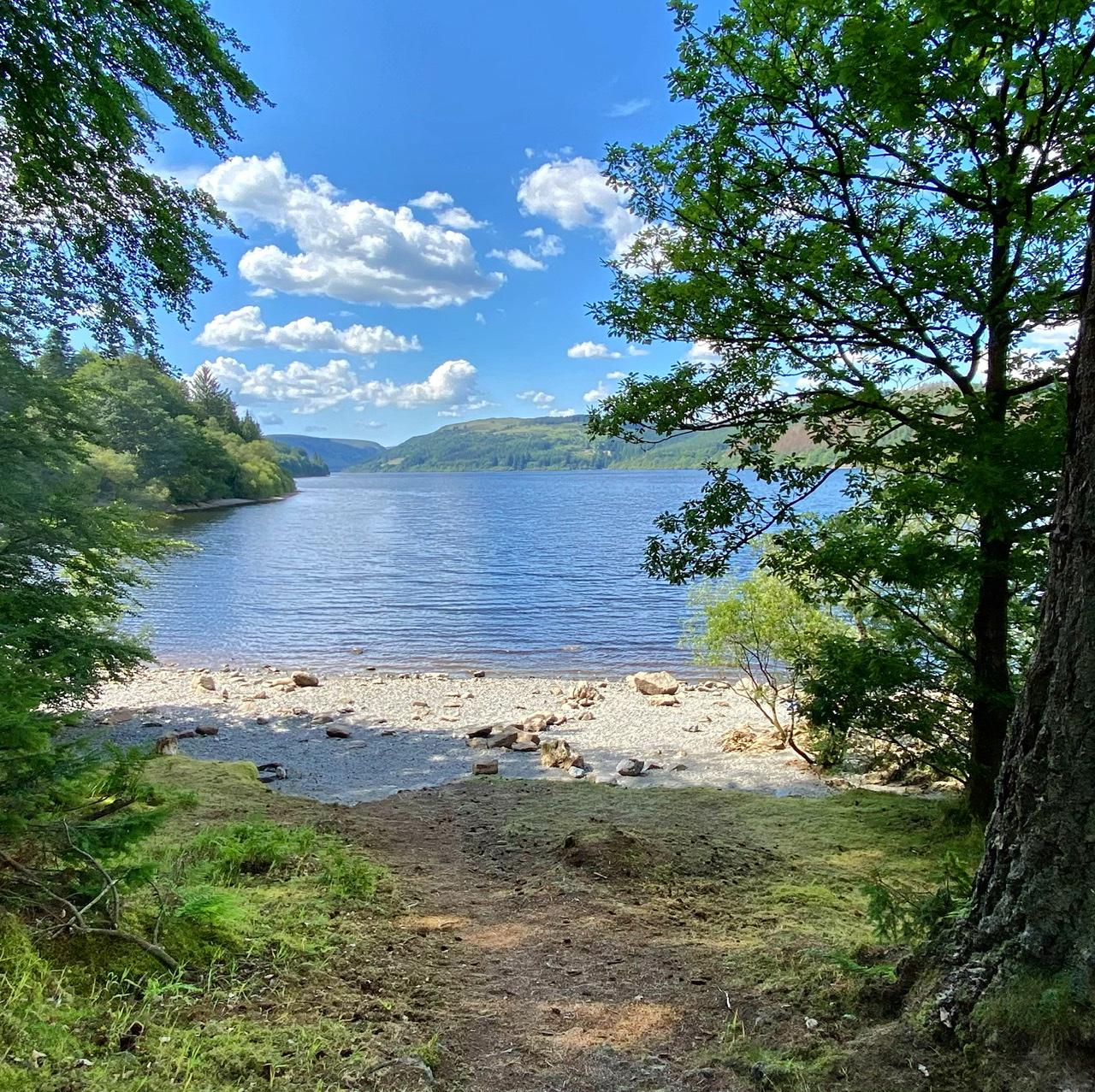 Through the pines, the lake awaits you…