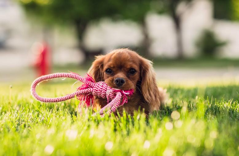 Probiotics for Your Pet: Do They Work?