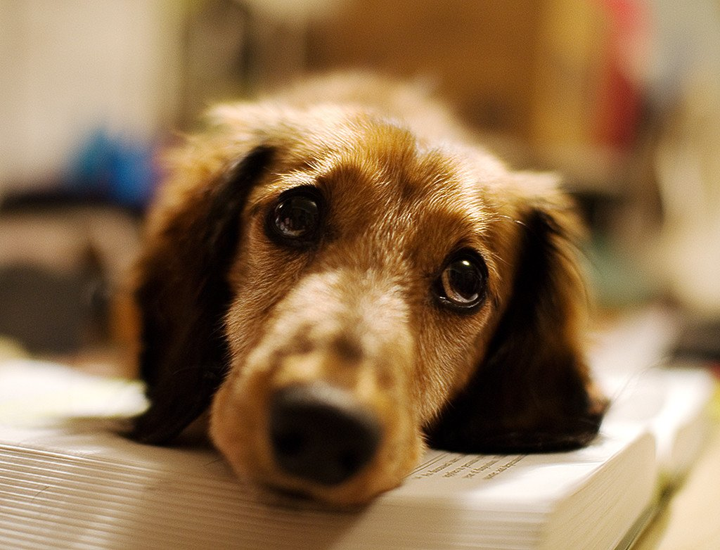 Gut bacteria is the secret to your dog's health