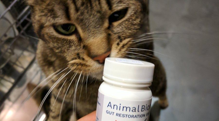 Pet Probiotics and Poobiotics