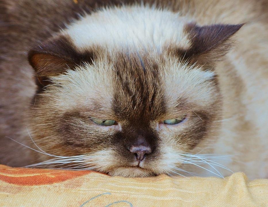 Sick cat resting