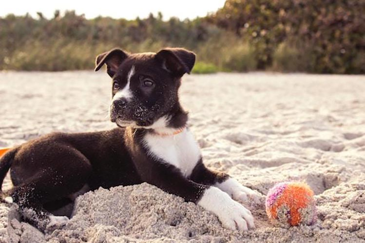 Protecting Your Pup from Parvo & the Potential for Fecal Transplants to Aid in Recovery