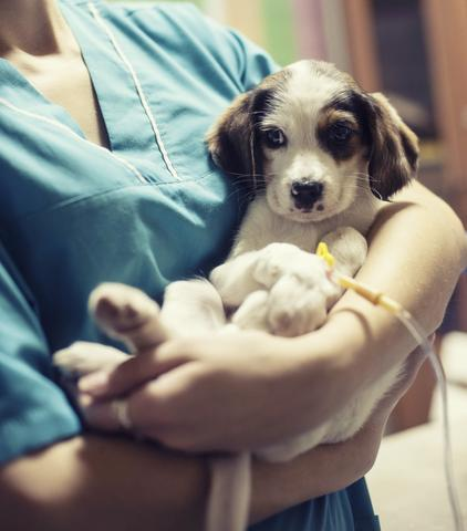 white dog being held by a vet - AnimalBiome