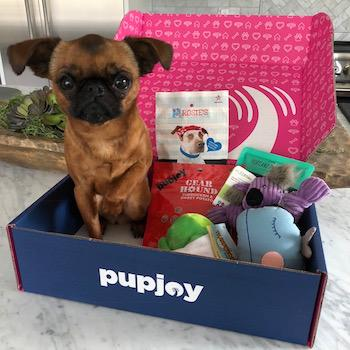 french bulldog in box of toys - AnimalBiome