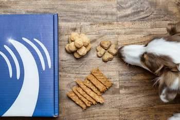dog with treats on floor - AnimalBiome