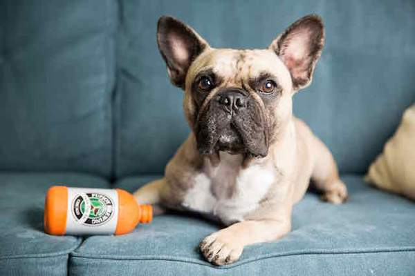 With PupJoy, You Can Treat Your Sensitive Dog
