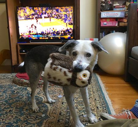 dog with owl stuffed animal in mouth - AnimalBiome
