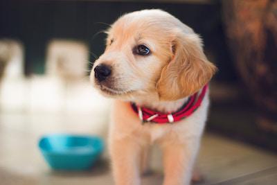 Doggy with diarrhea