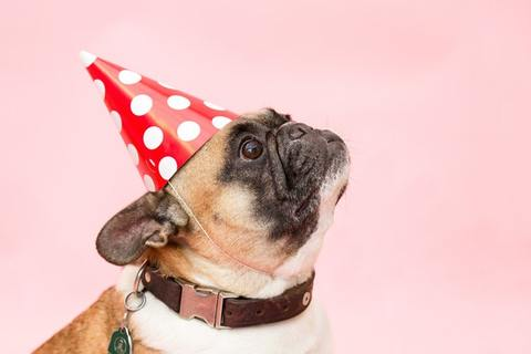 Cute bulldog with party hat on