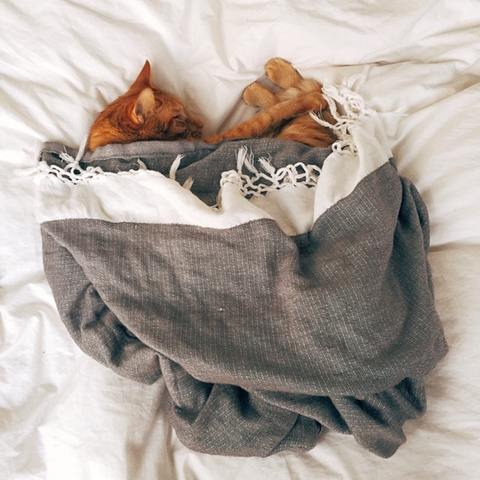 Ginger cat sleeping under blanket