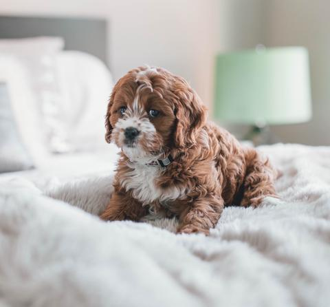 Cute puppy sitting on a bed