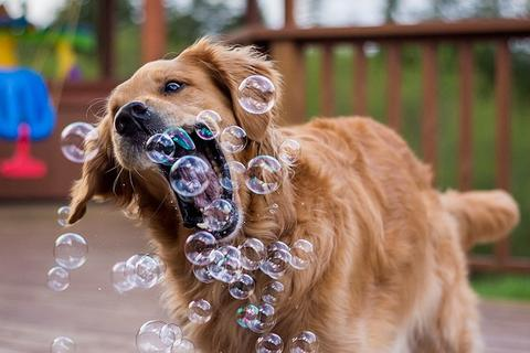 Happy dog playing with bubbles