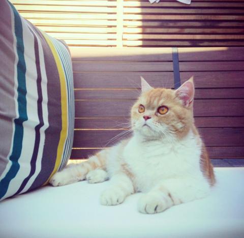 Danny the cat