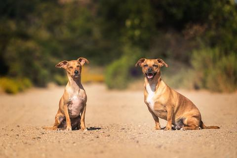 Two dogs sitting outside