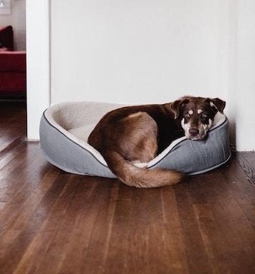 Sick dog resting