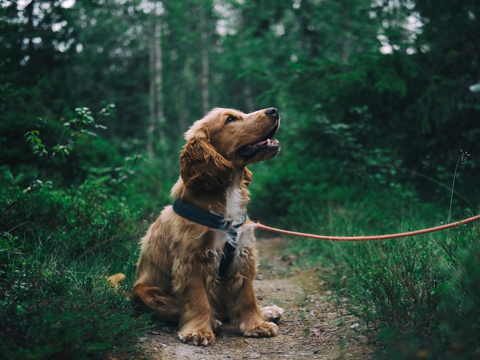 4 Holistic Pet Tips Your Pet Will Thank You For!