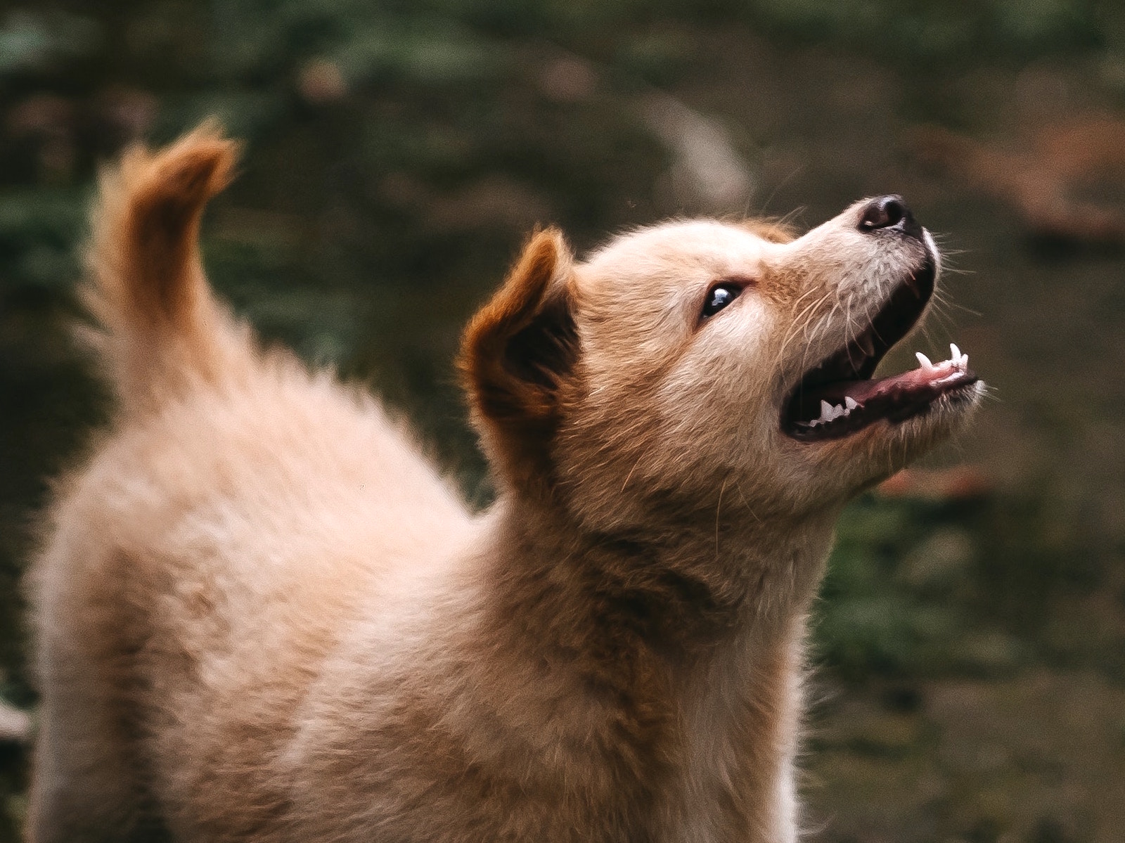 How Good Oral Health Supports Your Pet's Gut Microbiome