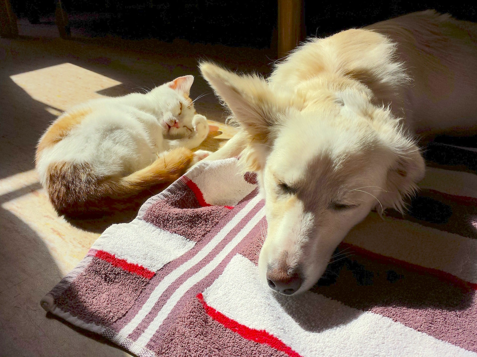 How to Support Your Pet During & After Antibiotics
