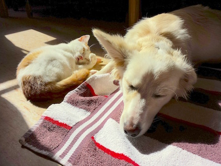 How to Support Your Cat or Dog During and After Antibiotics