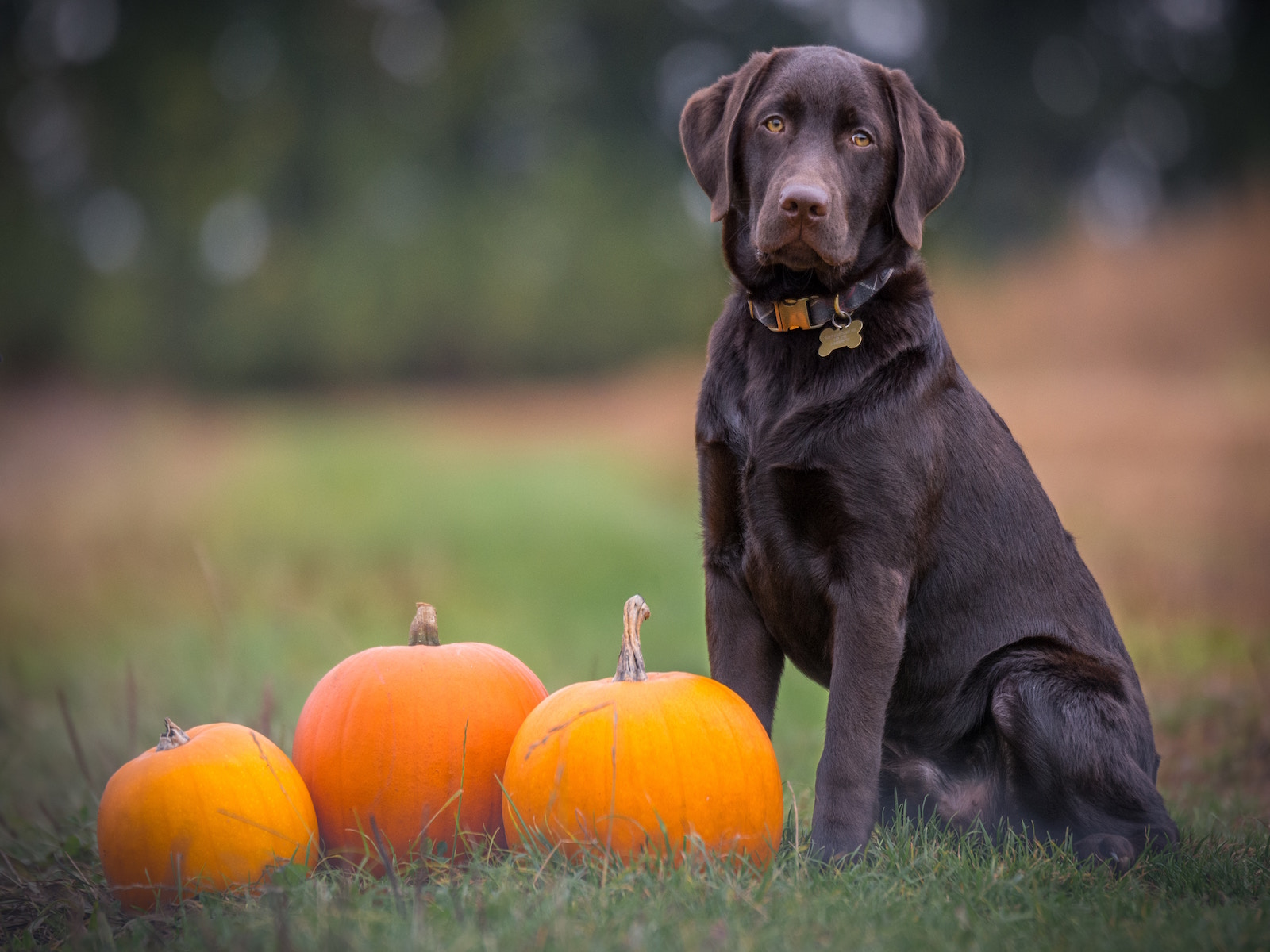 How to Give Your Pet a Safe & Spook-Free Halloween