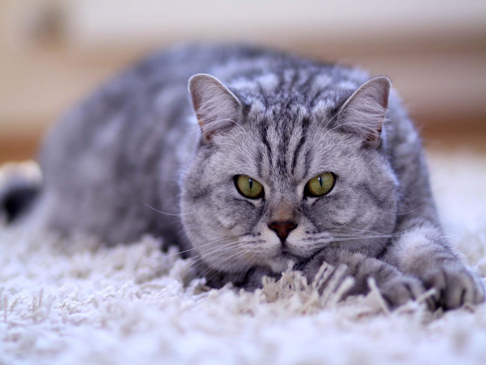 B12 Deficiency in Cats: The Role of the Gut
