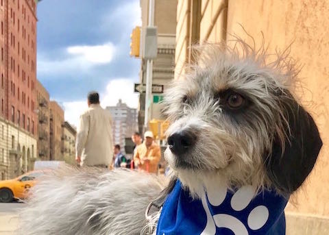 Doggy Diarrhea: Help for a Little Dog in the Big City