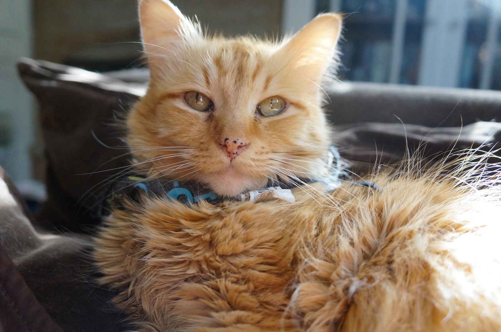 How a New Gut Remedy Saved an Abandoned Cat's Life